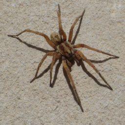 Уничтожение пауков в Салехарде